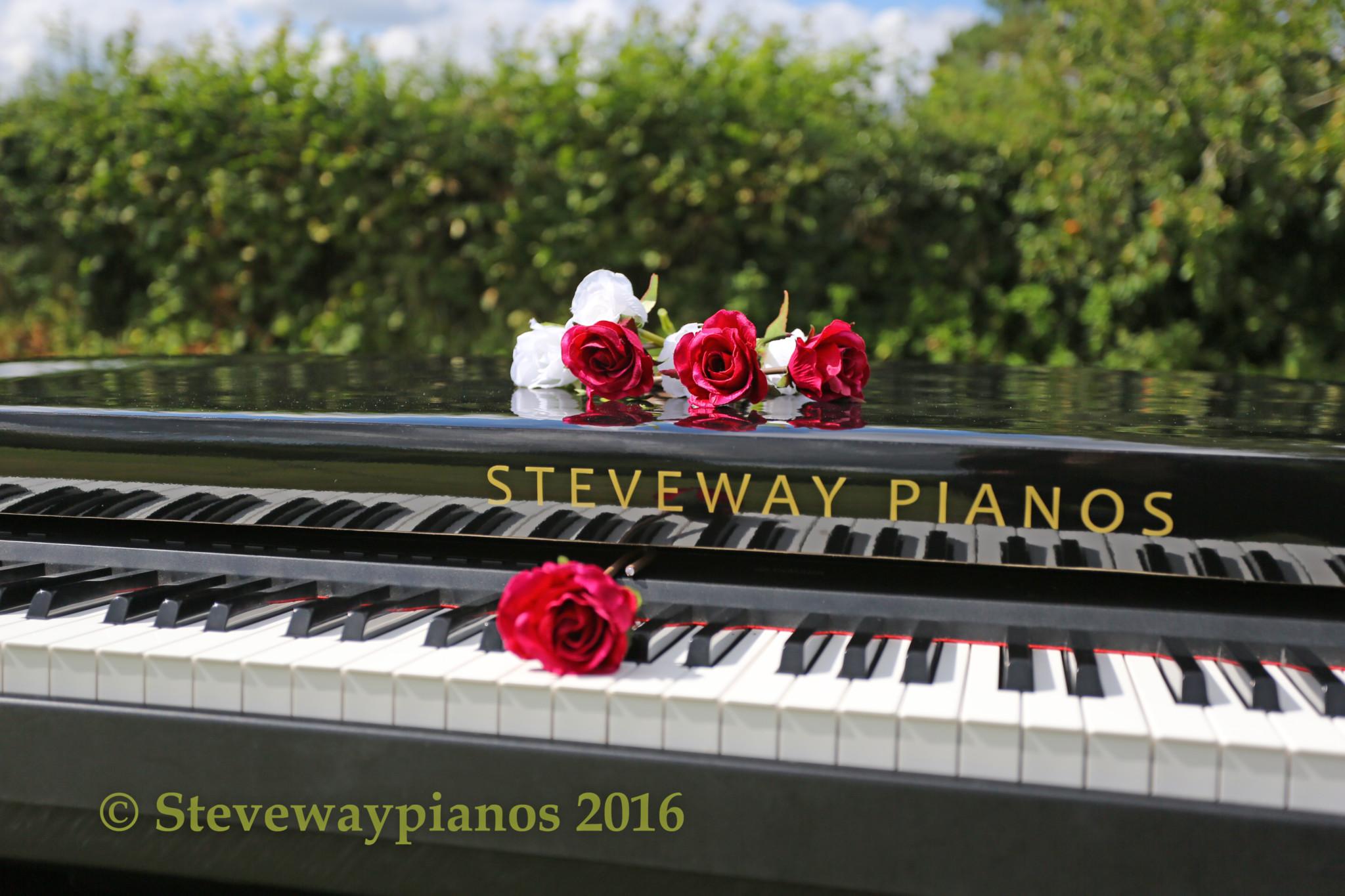 Steveway Pianos